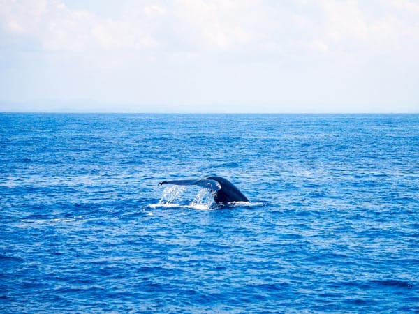 Mirissa Whale Watching Sri Lanka