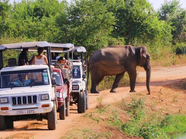 Udawalawe-National-Park-Safari